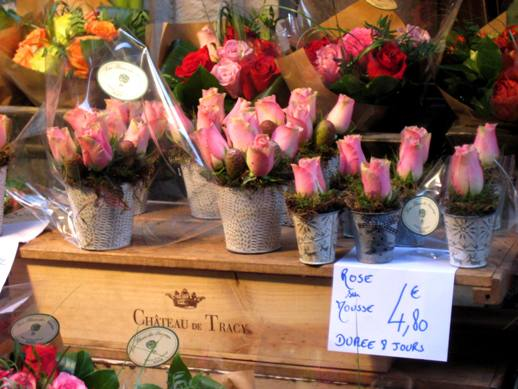 Flower Stall in Rouen